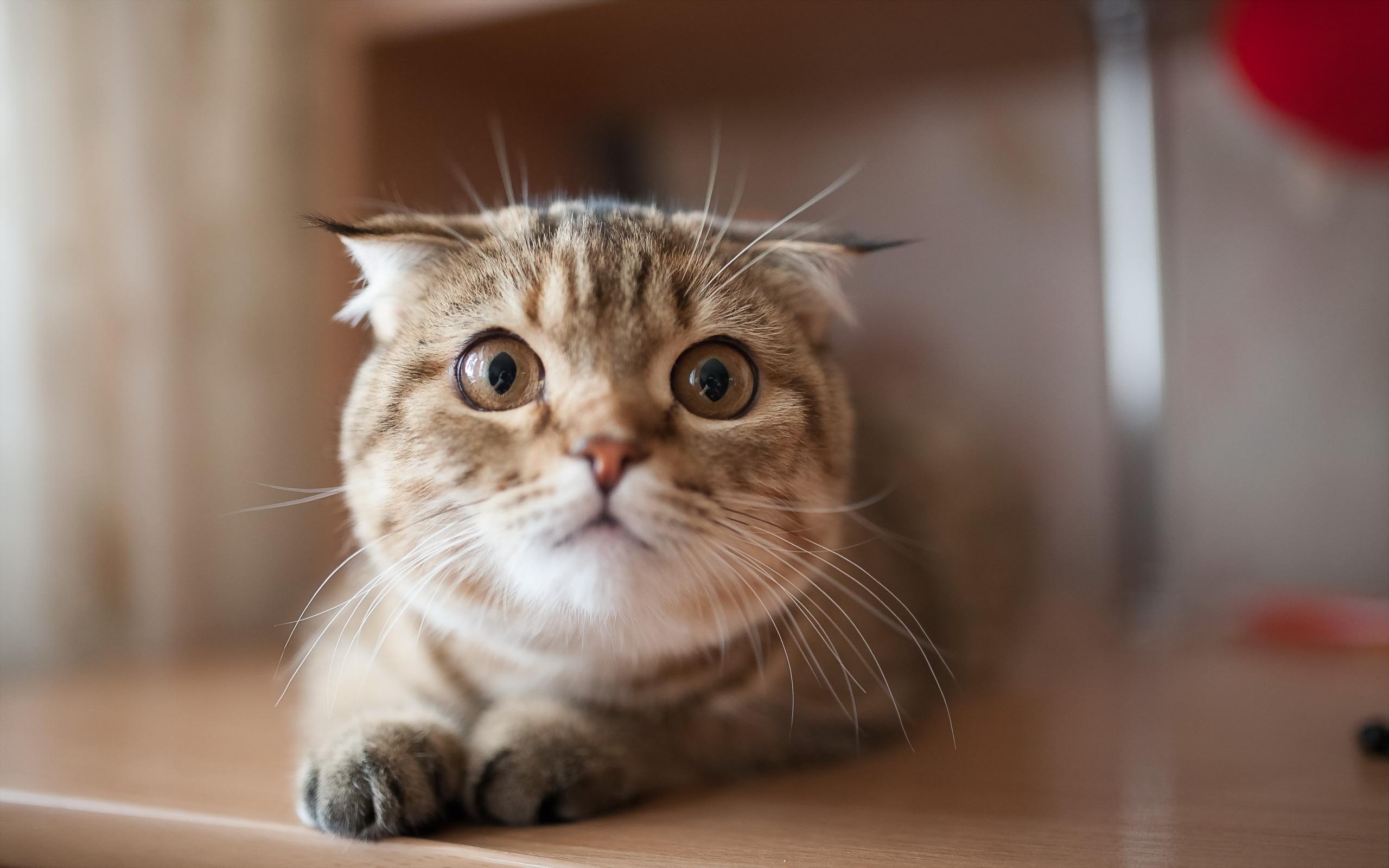 很胖很可爱的猫