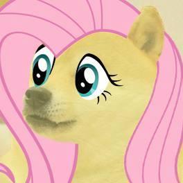 Doge Fluttershy