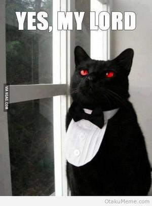 I WANT THIS CAT O.O