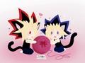 Kittens Yami and Yugi