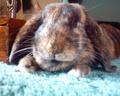 My bunny Coco
