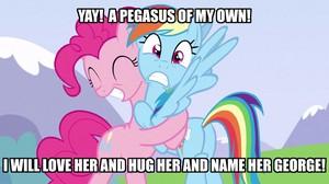 Rainbow Dash Meme