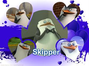Skipper au Skippsy