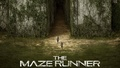 The Maze Runner fond d'écran