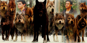 Twilight Saga werewolves