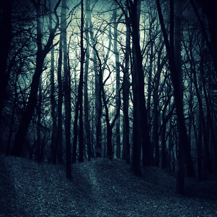 forest images dark woods hd wallpaper and background