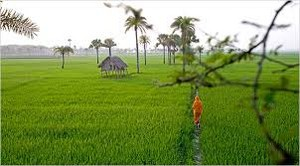 naturalof bangla