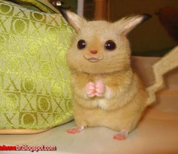A real pikachu!!!