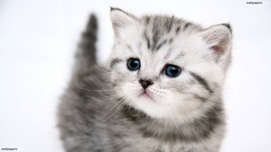 kucing are so cute! =)