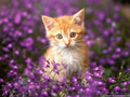 Cats are so cute! =) - cats photo