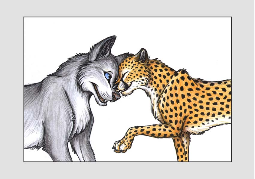 Cheetah vs wolf
