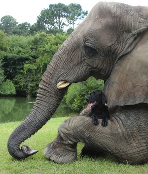 olifant and Dog