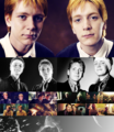 Fred and George♥ - fred-and-george-weasley photo