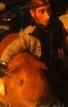 Hans  - guinea-pigs photo