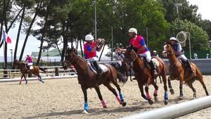 Horseball Championnat