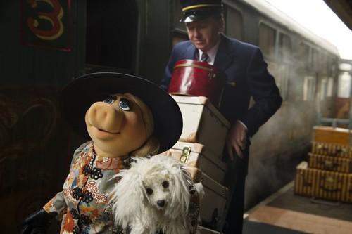 The Muppets wallpaper titled Miss piggy