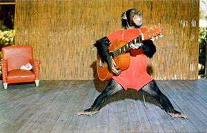 Monkey ギター