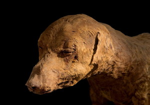 Mummified Dog