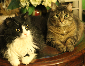 My 2 cats, Sierra and Sylvester