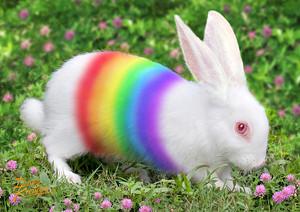pelangi, rainbow bunny