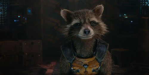 Guardians of the Galaxy 바탕화면 probably with a common raccoon called Rocket Raccoon