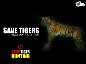 Stop tiger hunting