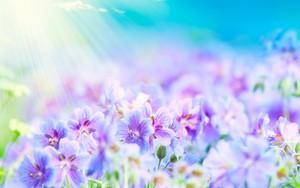 Summer Цветы