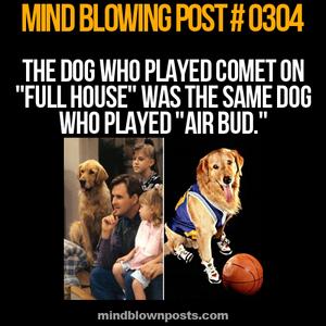 air bud fact