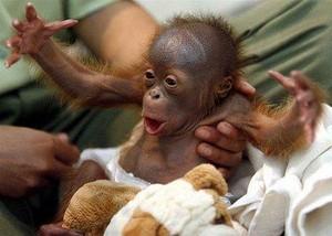 monkey10101