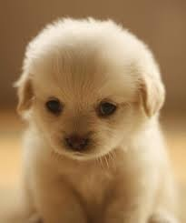 A little cute puppy!