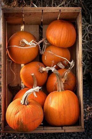клеть, ящик of Pumpkins