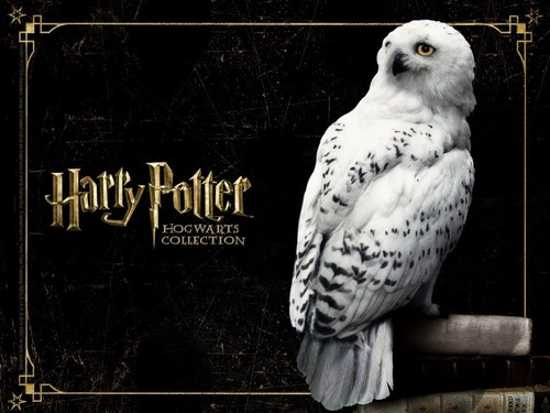 Harry Potter wallpaper probably containing a goshawk, a kestrel, and a peregrine entitled HP Hogwarts Collection