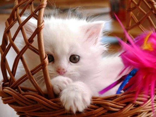 Sini12 바탕화면 with a basket and a wicker basket entitled I bought a pet for you!