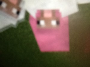 I spotted a pink sheep!