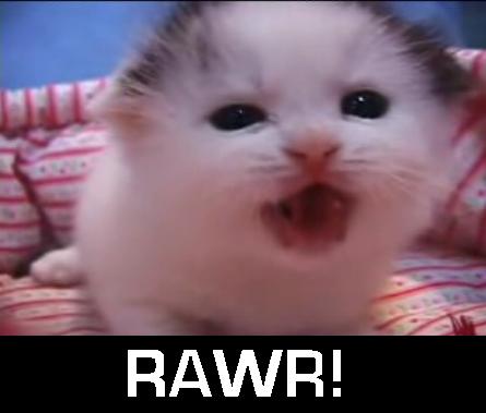 Kitty Goes Rawr - Cats Photo (37509551) - Fanpop