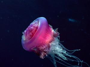 Marine wild life