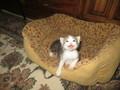 New Baby Kitty
