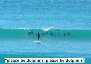 Please be dolphins...