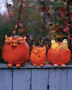 pompoen Owls
