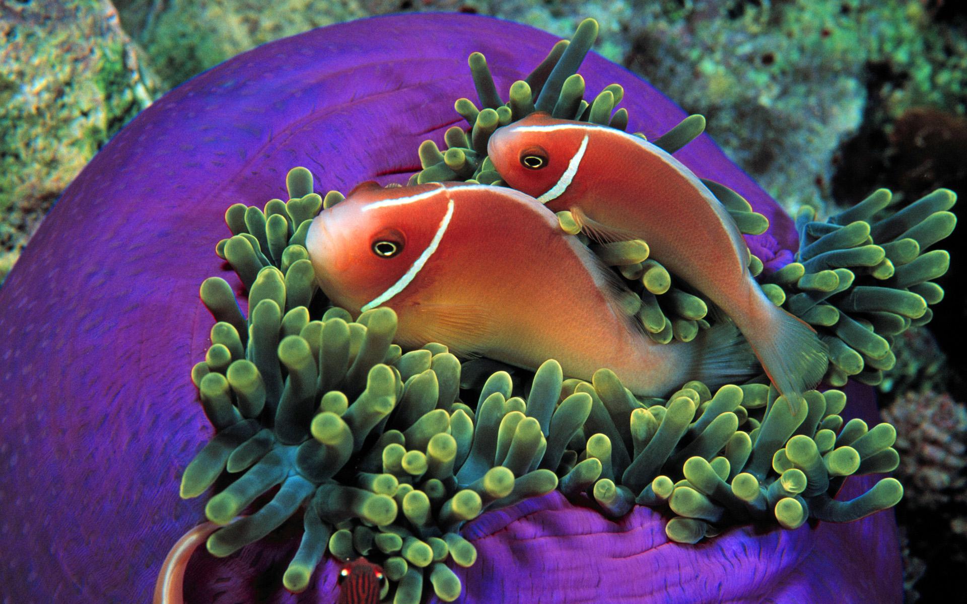 Tropical Fish Everybodys Favorites Wallpaper 37596558