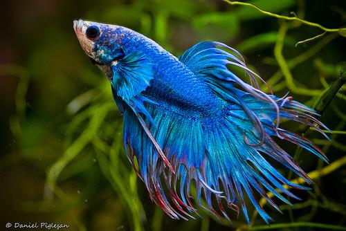 Nocturnal Mirage fond d'écran titled Tropical poisson