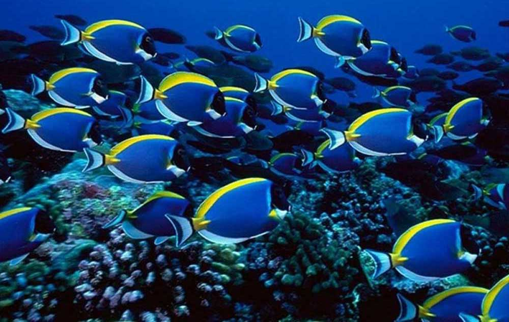 Nocturnal Mirage Images Tropical Fish HD Wallpaper And Background Photos