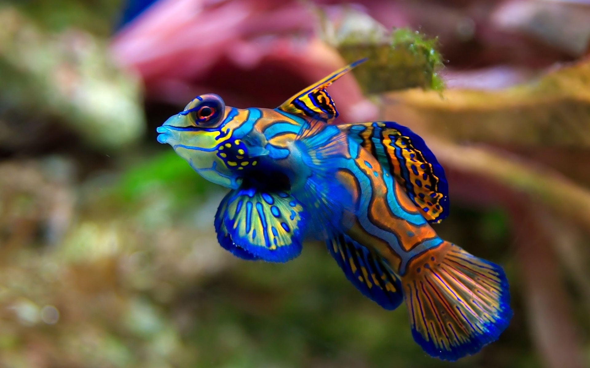 Nocturnal Mirage Images Tropical Fish Hd Wallpaper And Background