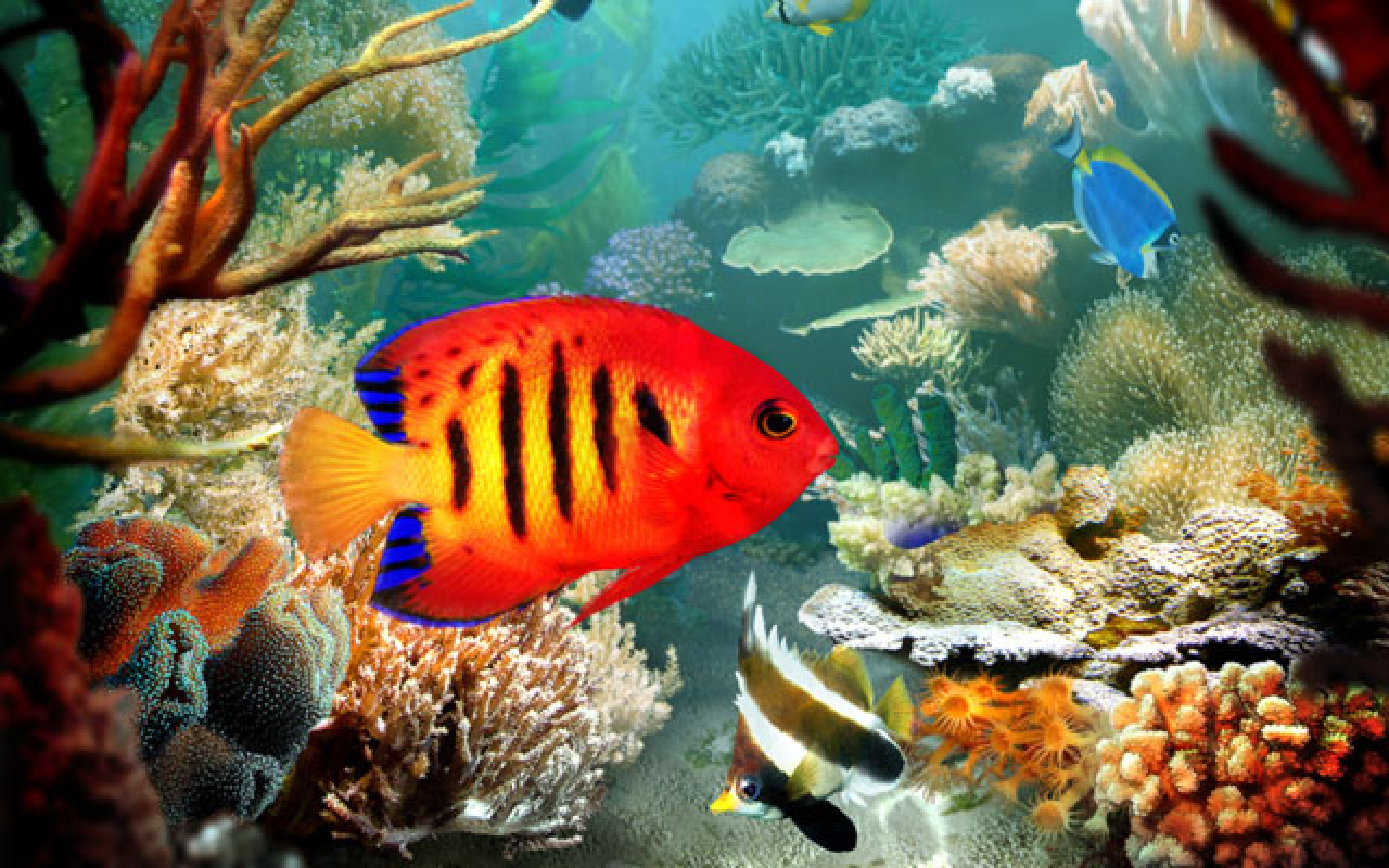 Nocturnal Mirage images Tropical fish HD wallpaper and background ...