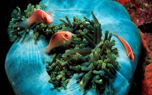 Tropical рыба