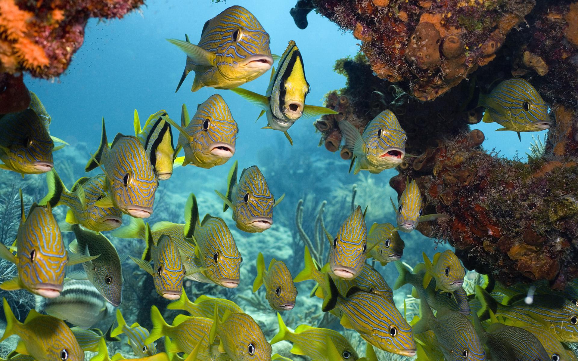 Tropical मछली