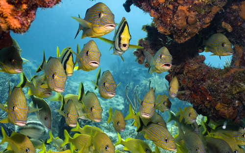 Nocturnal Mirage fond d'écran entitled Tropical poisson