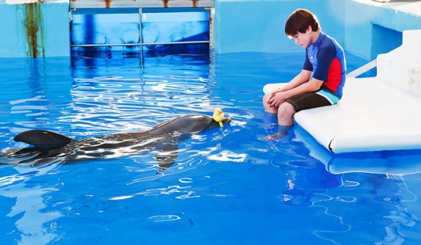 Winter s hope images winter dolphin tale wallpaper and background