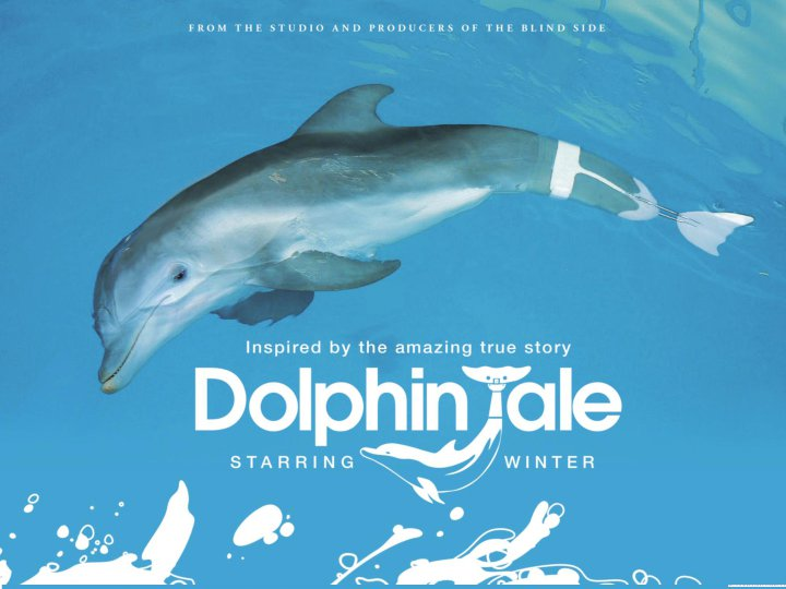 Dolphin's Tale Winter's Hope images W...