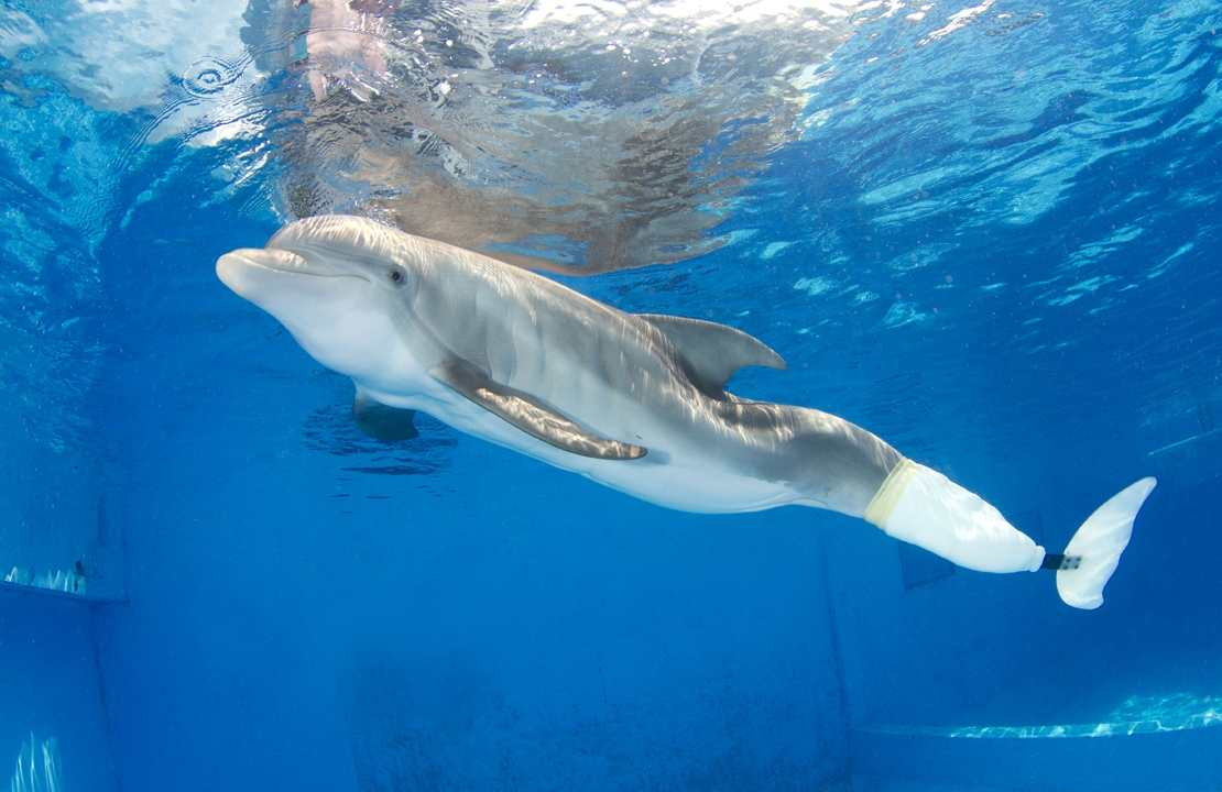 an overview of the dolphins Swim with dolphins cancun overview: spend a great cancun vacation swimming with the dolphins in cancun and live one of the best things to do in cancun that you always.